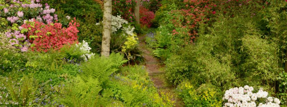Dorothy Clive Garden 1